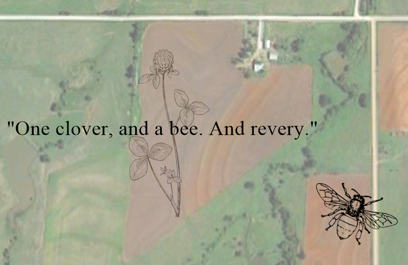 """To make a prairie it takes a clover and one bee,""… - Emily Dickinson"