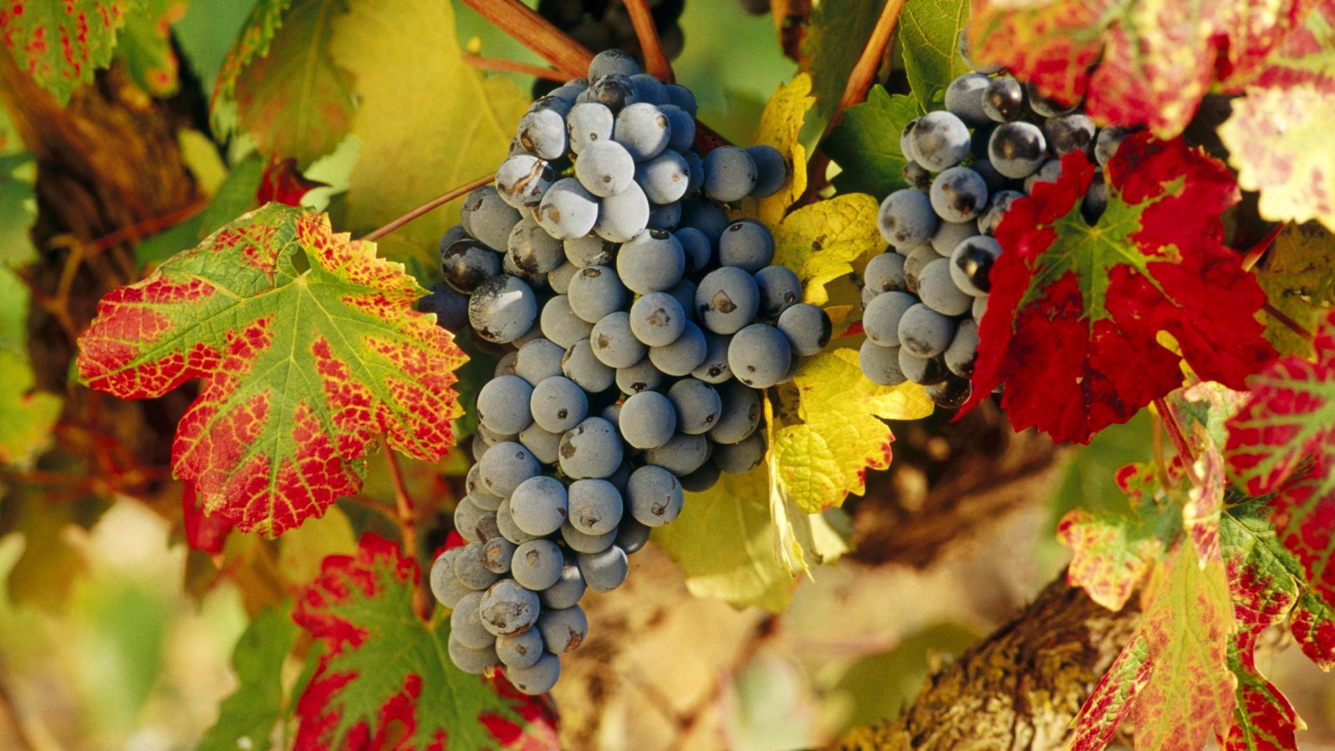 Harvest-Time-La-Rioja-Spain.jpg