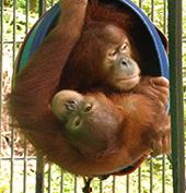 Siboy (onder) en Seroja. lik voor grote foto