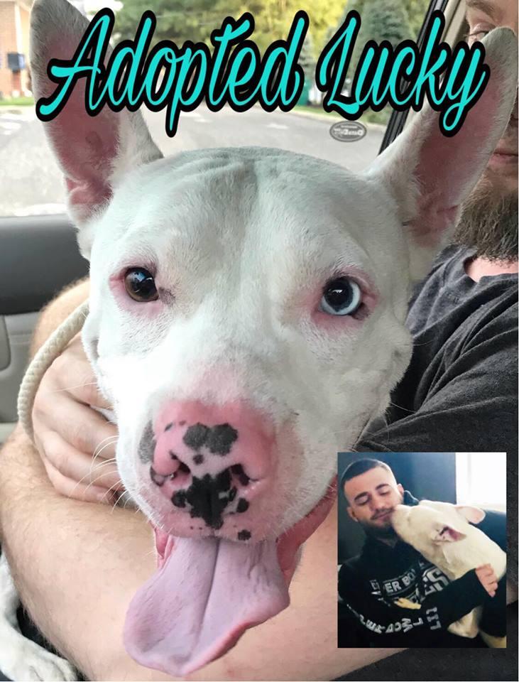 AdoptedLucky.jpg