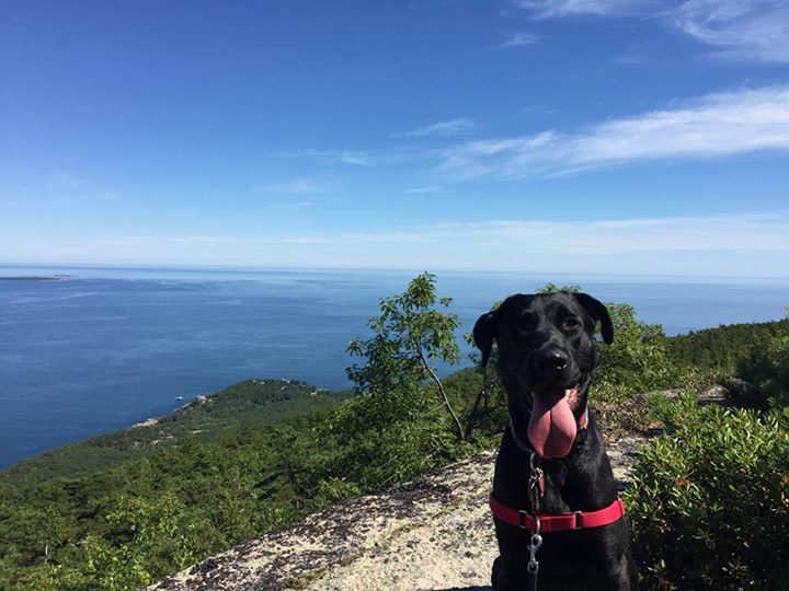 We adopted Moose (previously Brian) in May and brought him to Maine where he quickly fell in love with running on the beach, hiking in Acadia National Park, and swimming in the lake! Not only is he our outdoor adventure sidekick, but he is also the world's best cuddler which we love. We are so happy to have this guy in our lives and can't imagine it without him. We are so glad that Freedom Street Rescue was able to unite this big goofy pup with us, all the way from Texas!