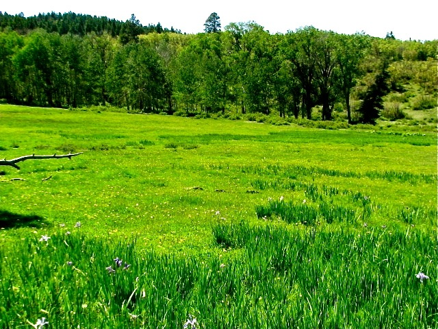 Colorado ranches