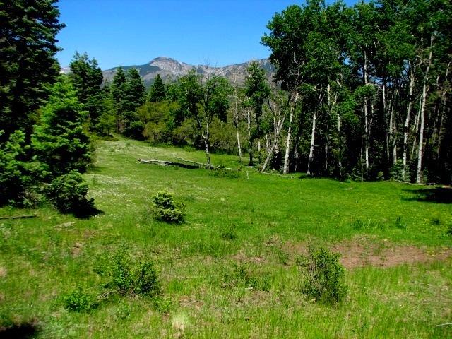 Pagosa Springs hunting land