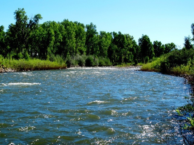 Water Rights are included in the purchase of Paradise River Ranch. The irrigated meadow on Paradise River Ranch makes forvery nice feed for horses andother livestock. Paradise River Ranch has abundant wildlife including elk, deer, wild turkeys, and grouse.