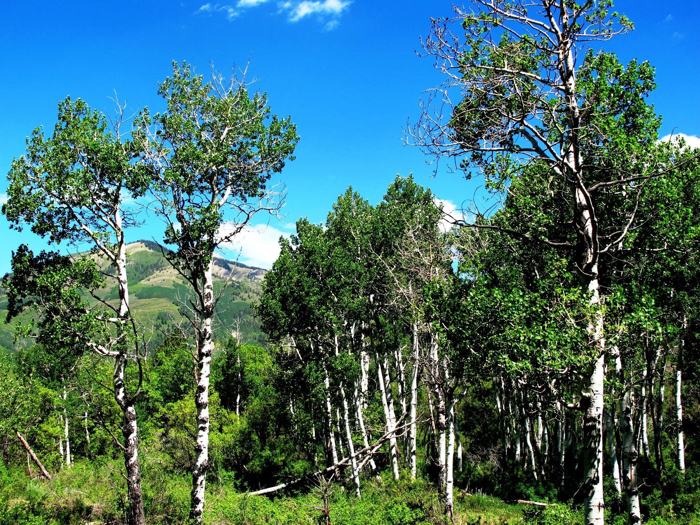 Colorado hunting cabin land