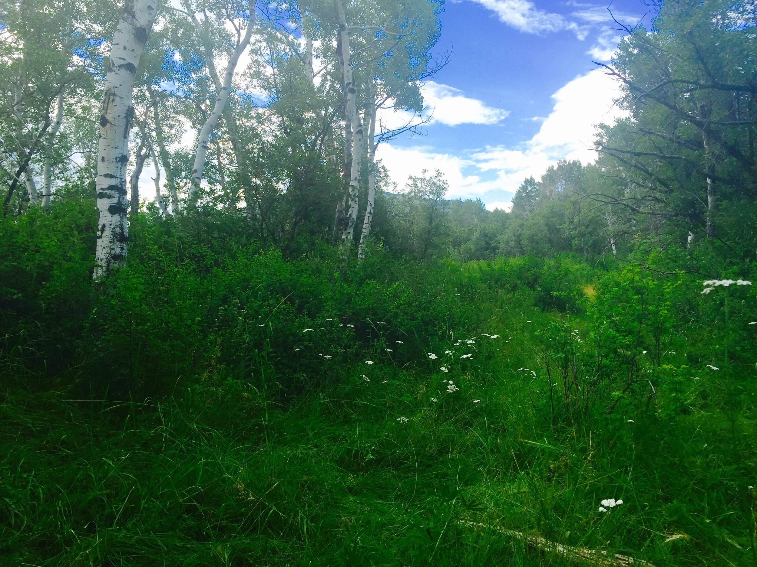 Hesperus, CO property for sale