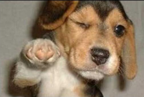 Fist bump puppy thinks you got it too.  (Image)