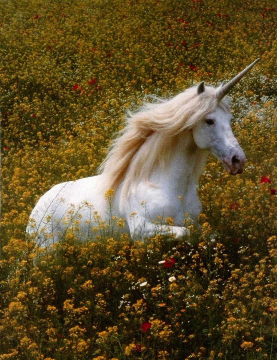 Keep searching for that unicorn named…Stability.  (Image)