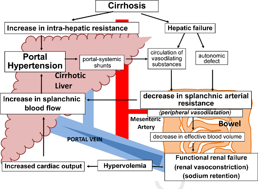 The vicious cycle of portal hypertension ( Image )