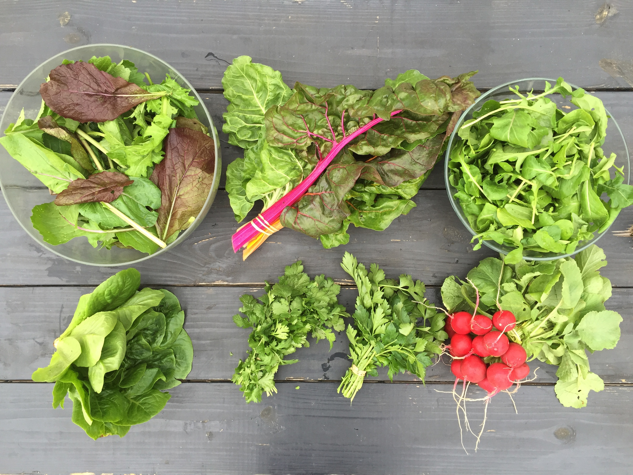 Winter shares feature greens, herbs, root crops, and storage crops. That means salad mix, heads of lettuce, arugula, kale, chard, collards, cabbage, bok choy, cilantro, dill, fennel, parsley, rosemary, extra sweet carrots, beets, juicy salad turnips, radishes, a variety of sweet potatoes, and winter squash.
