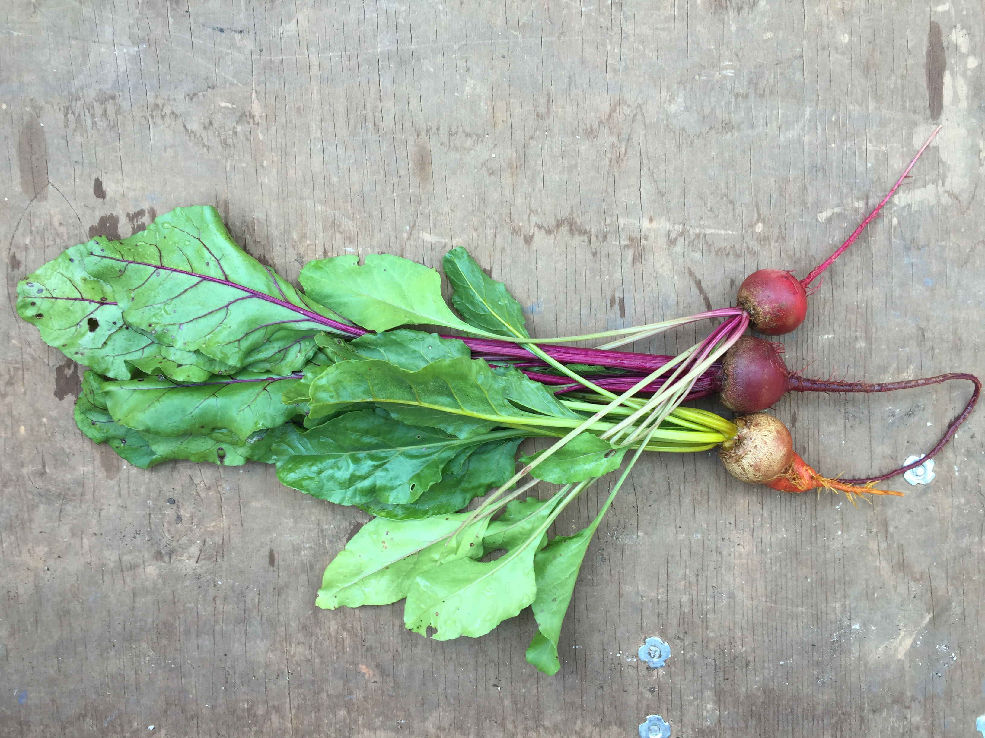 Golden, red, and chioggia beets