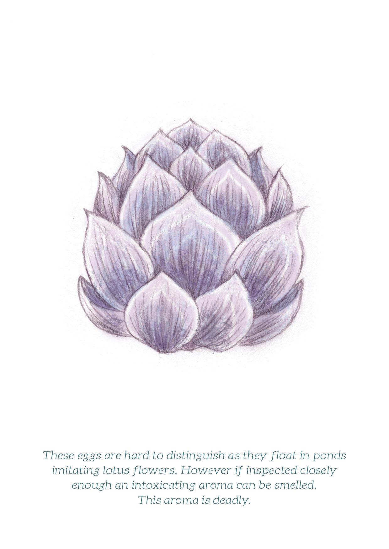 lotus egg web.jpg