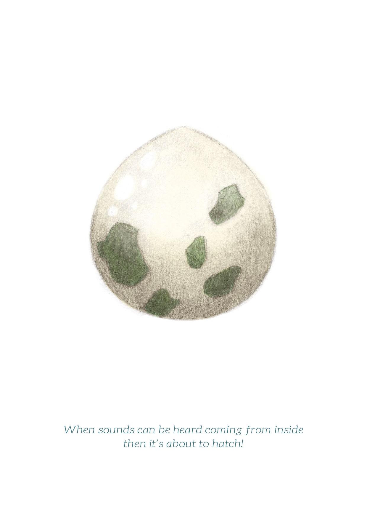 pokemon egg web.jpg