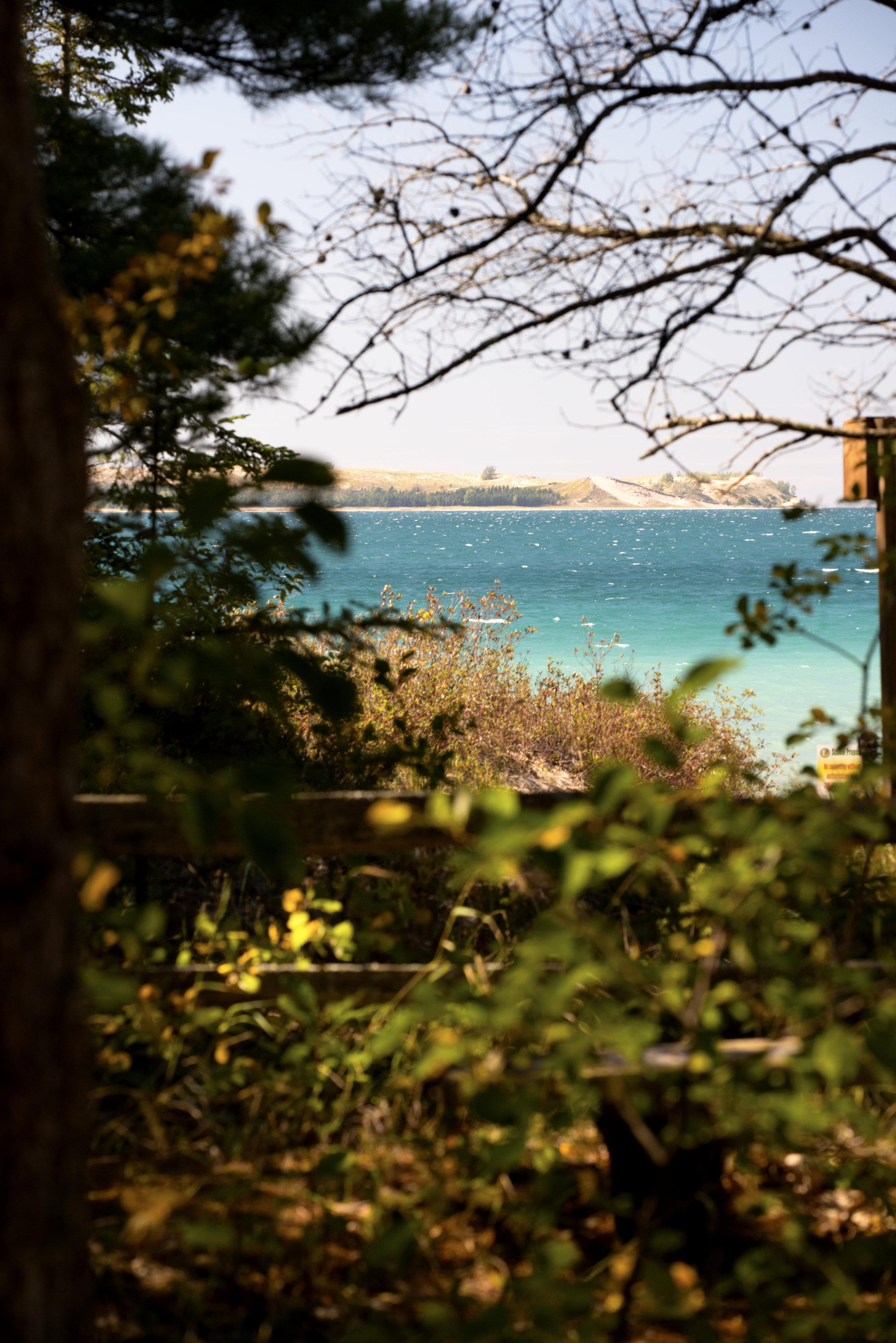beach_through_trees.jpg