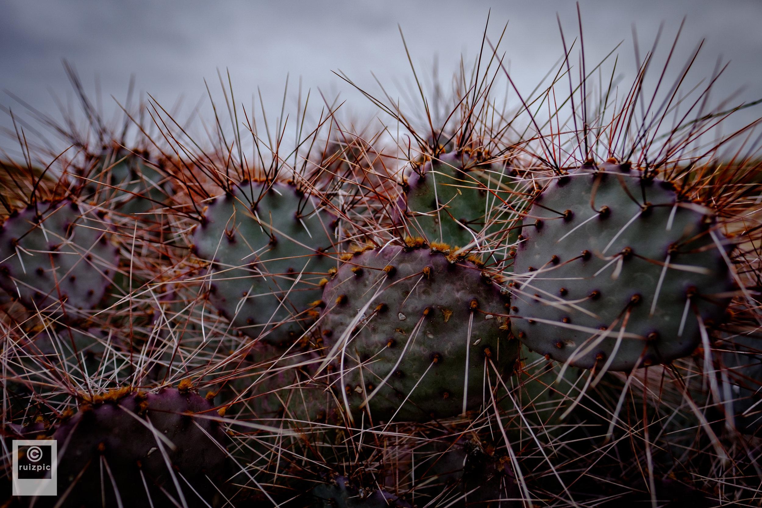 Justin Ruiz Photography_DSF0589.jpg