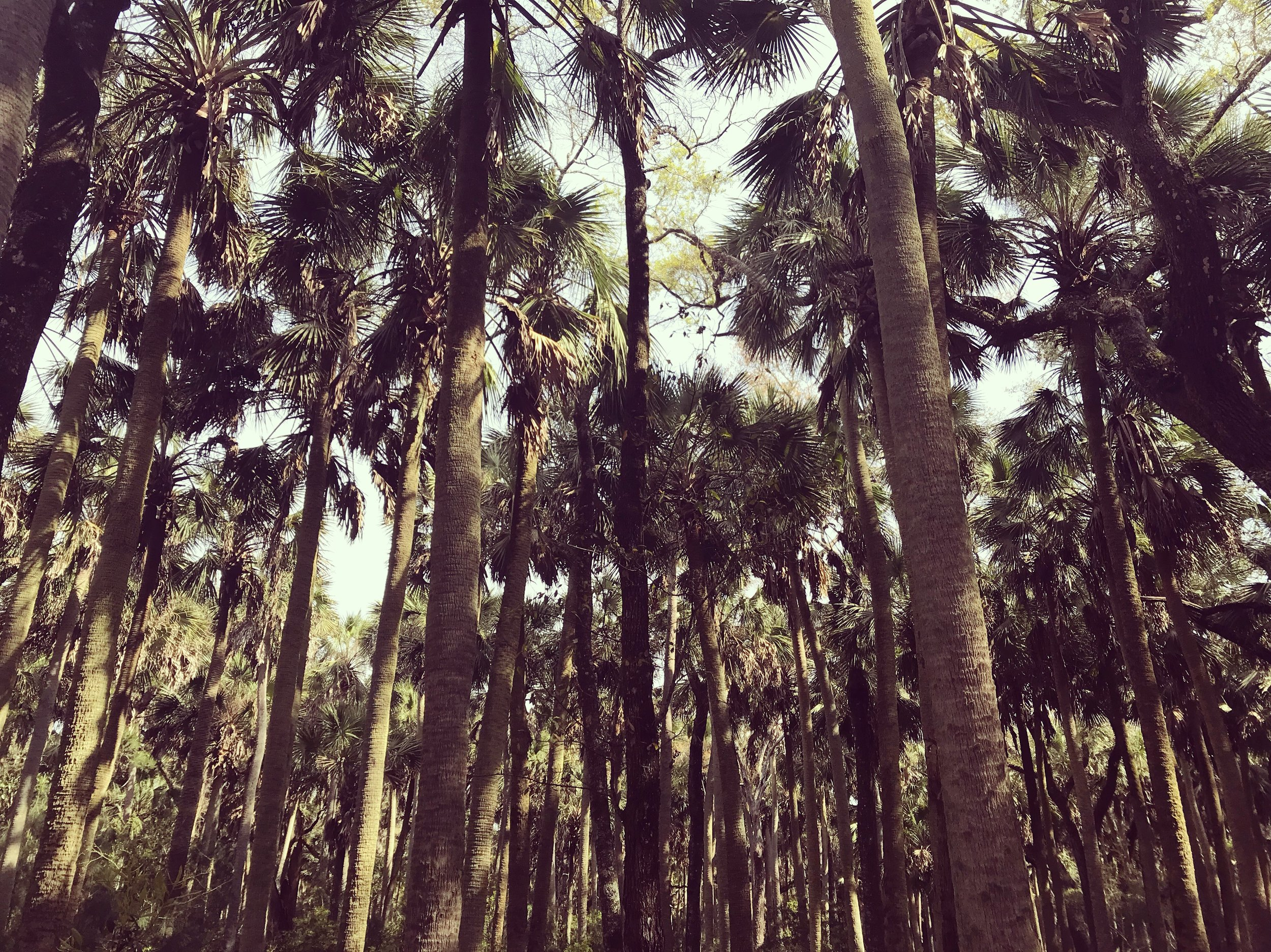 Cathedral of Palms