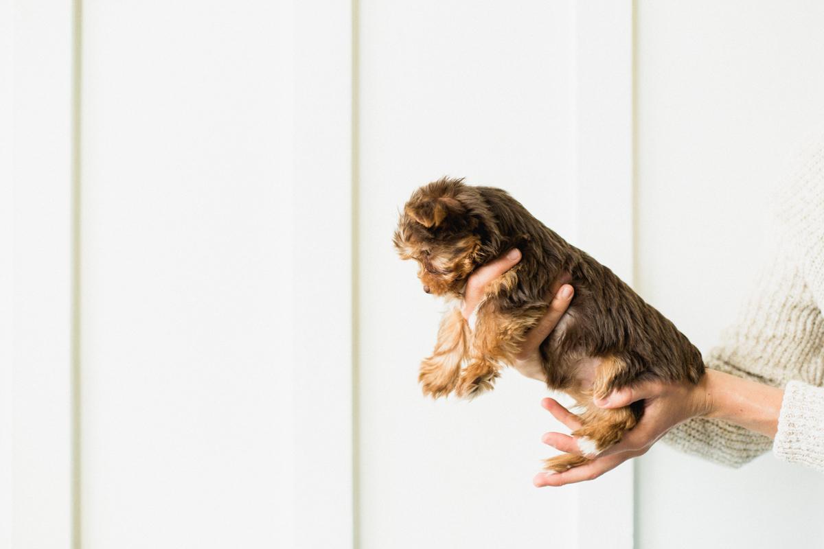 Blaine-Puppy-Birthday-29.jpg