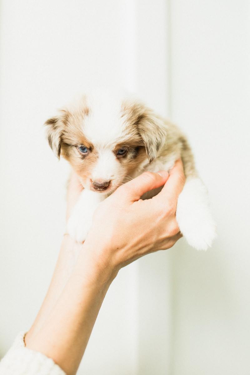 Blaine-Puppy-Birthday-70.jpg