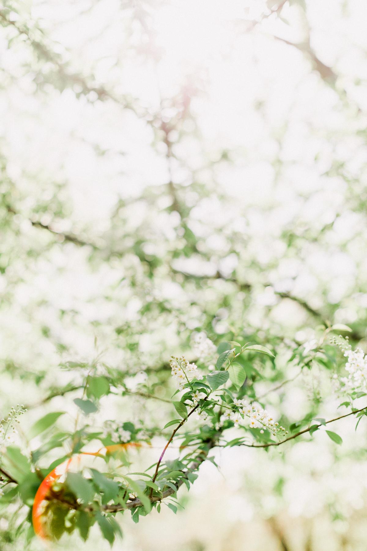Bloom-9.jpg