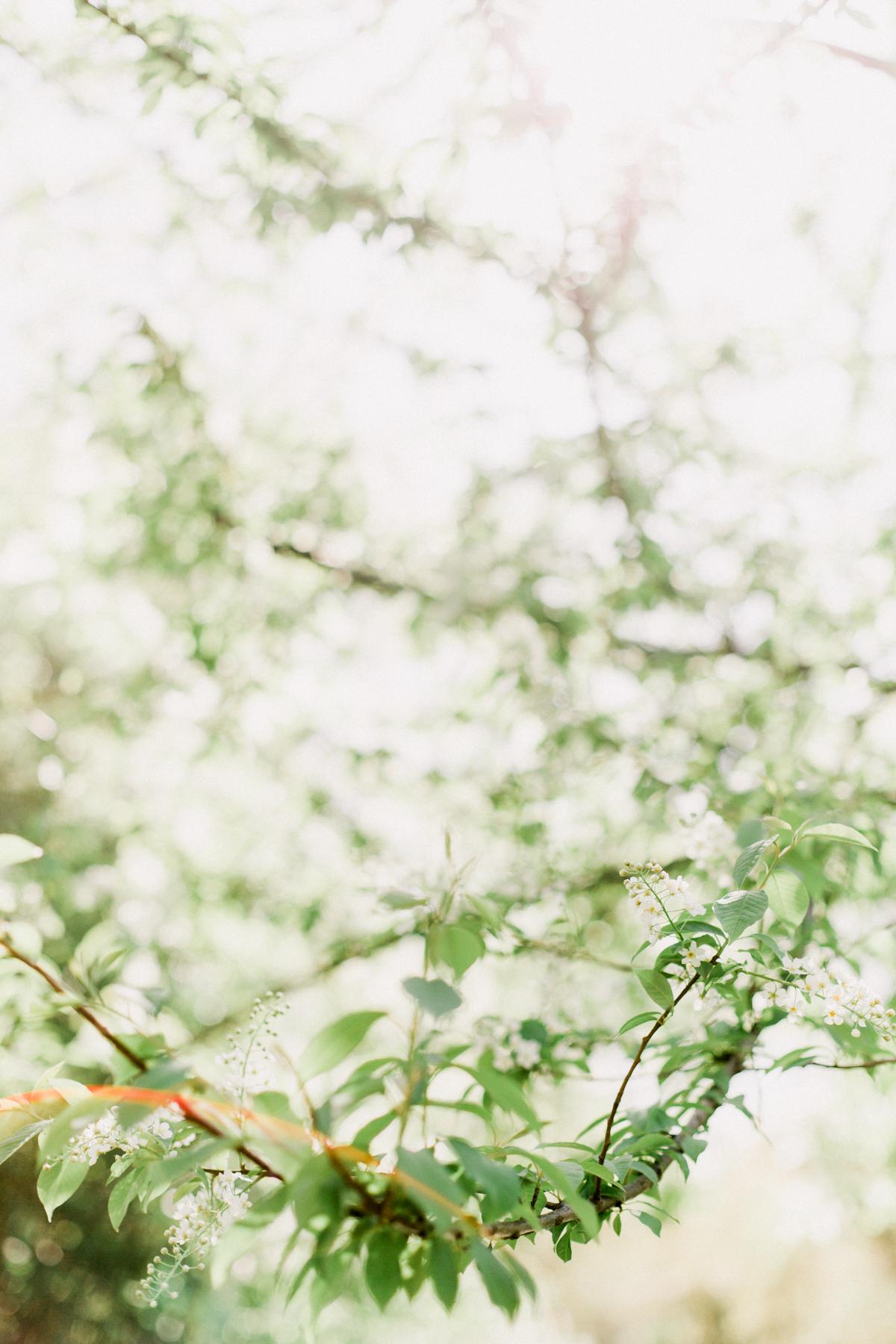 Bloom-10.jpg