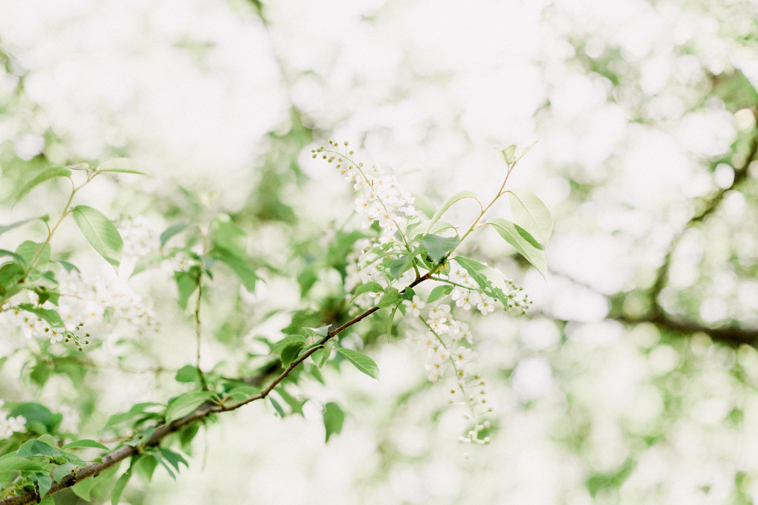 Bloom-16.jpg