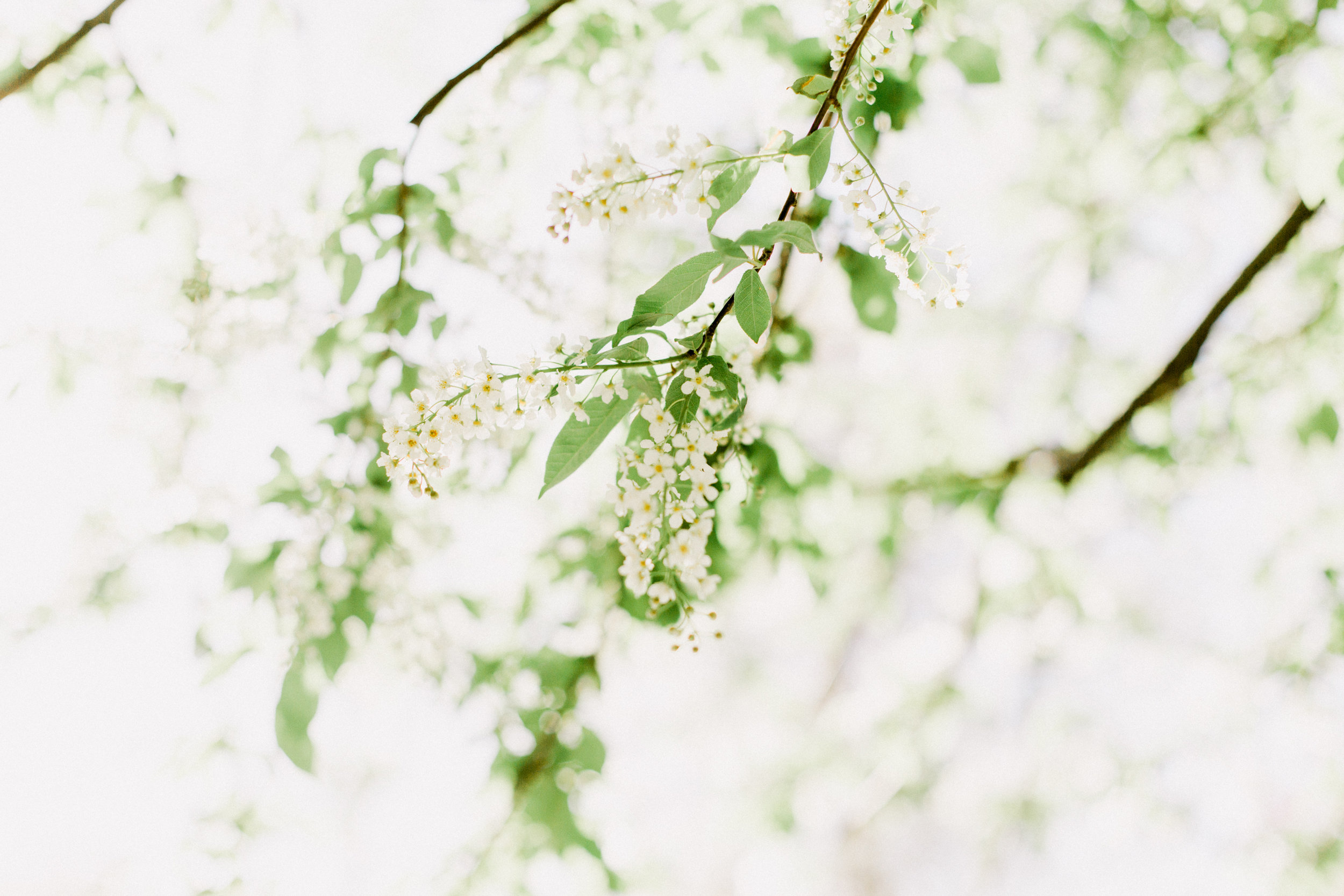 Bloom-28.jpg