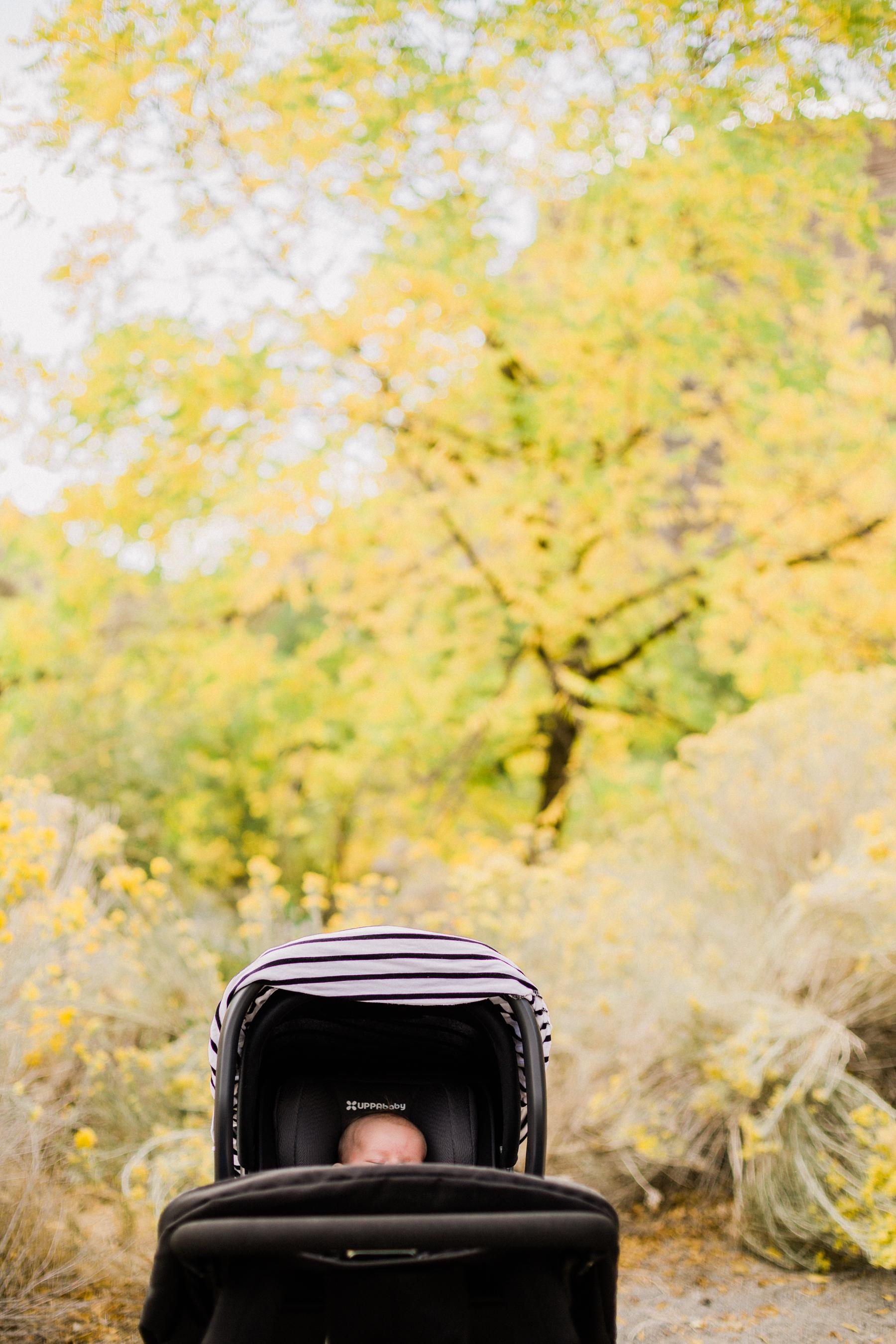 Fall-Walk-2.jpg