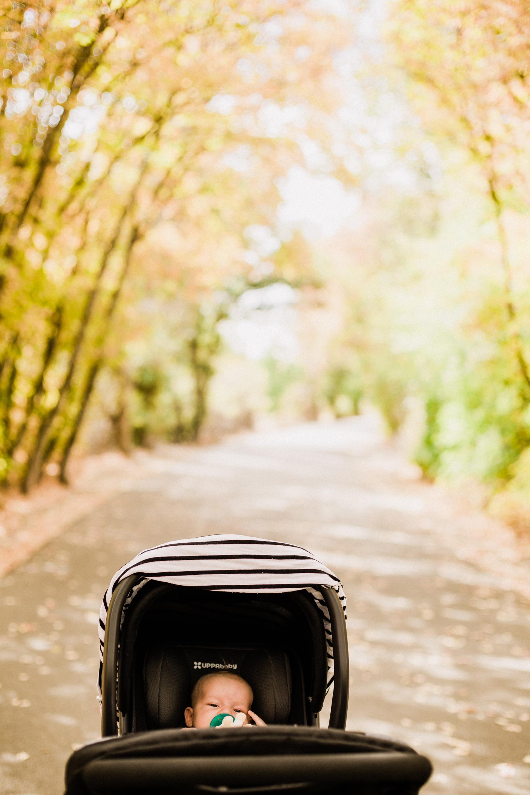 Fall-Walk-9.jpg