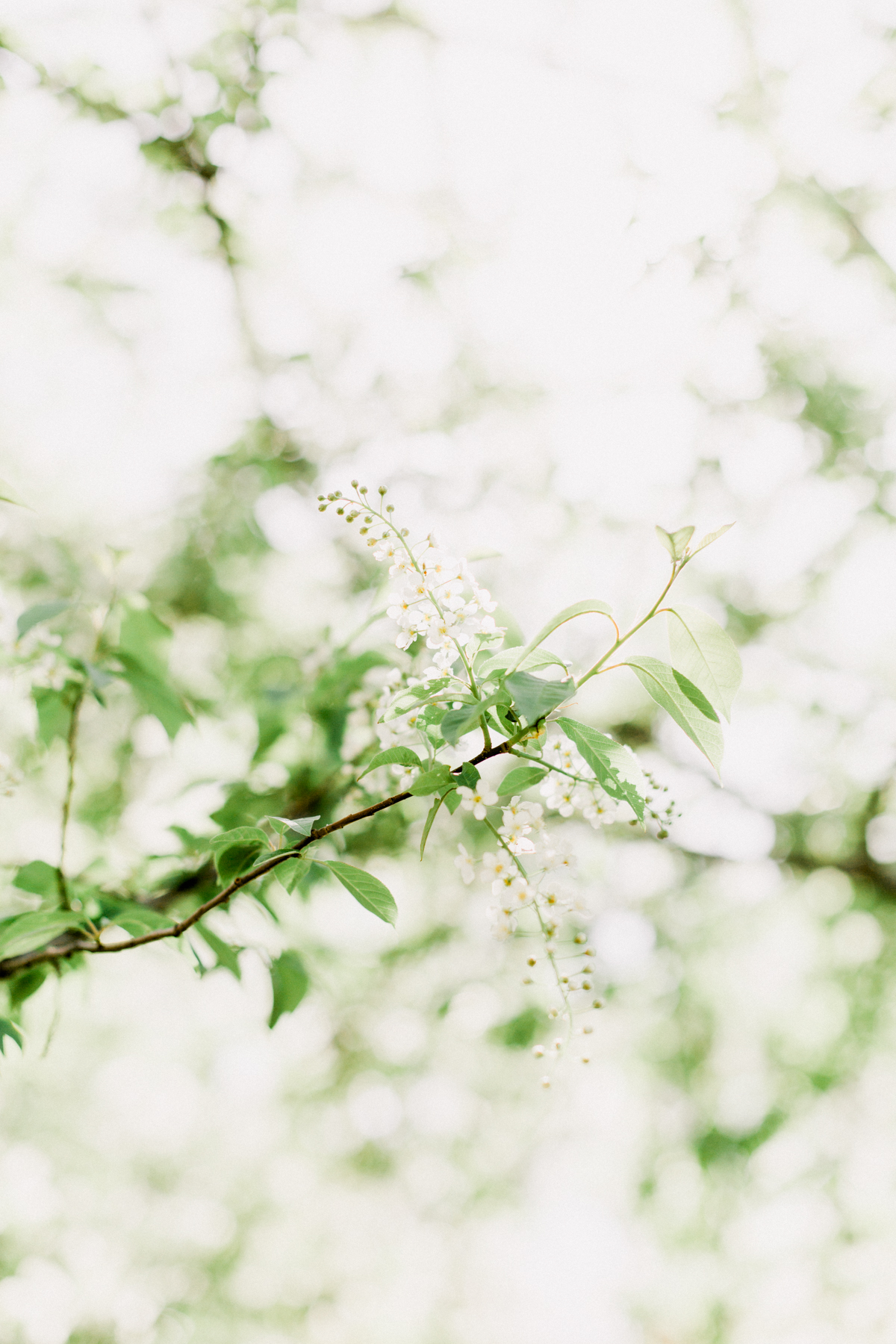 Bloom-17.jpg