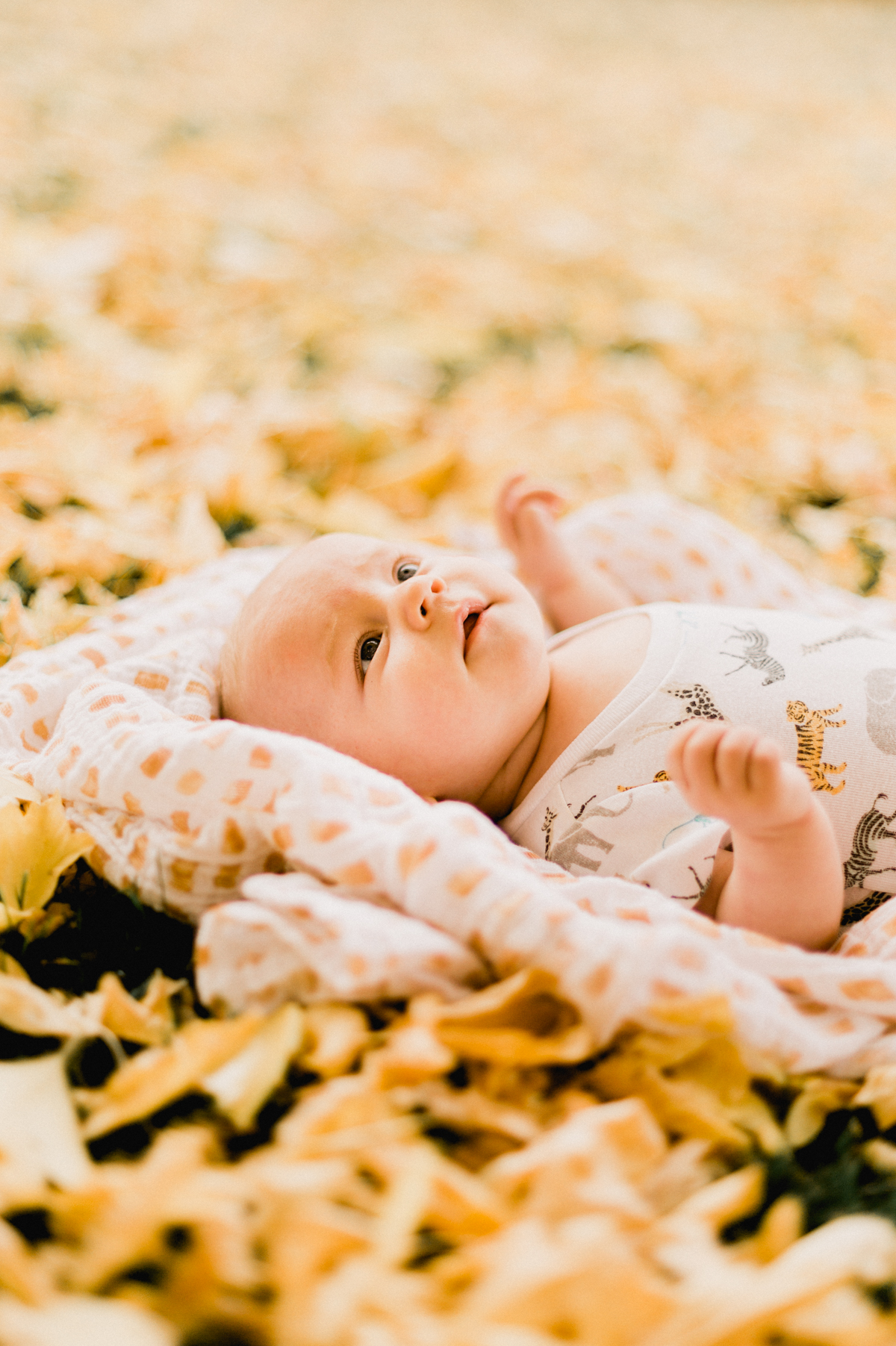 Yellow-Leaves-44.jpg