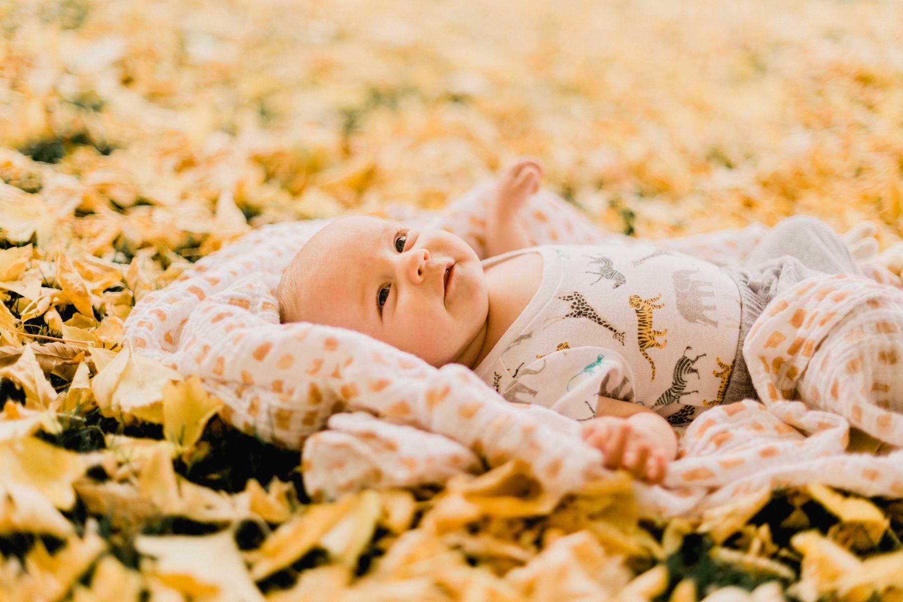 Yellow-Leaves-42.jpg
