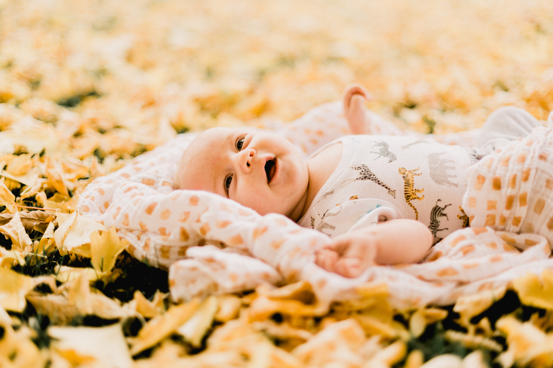 Yellow-Leaves-52.jpg