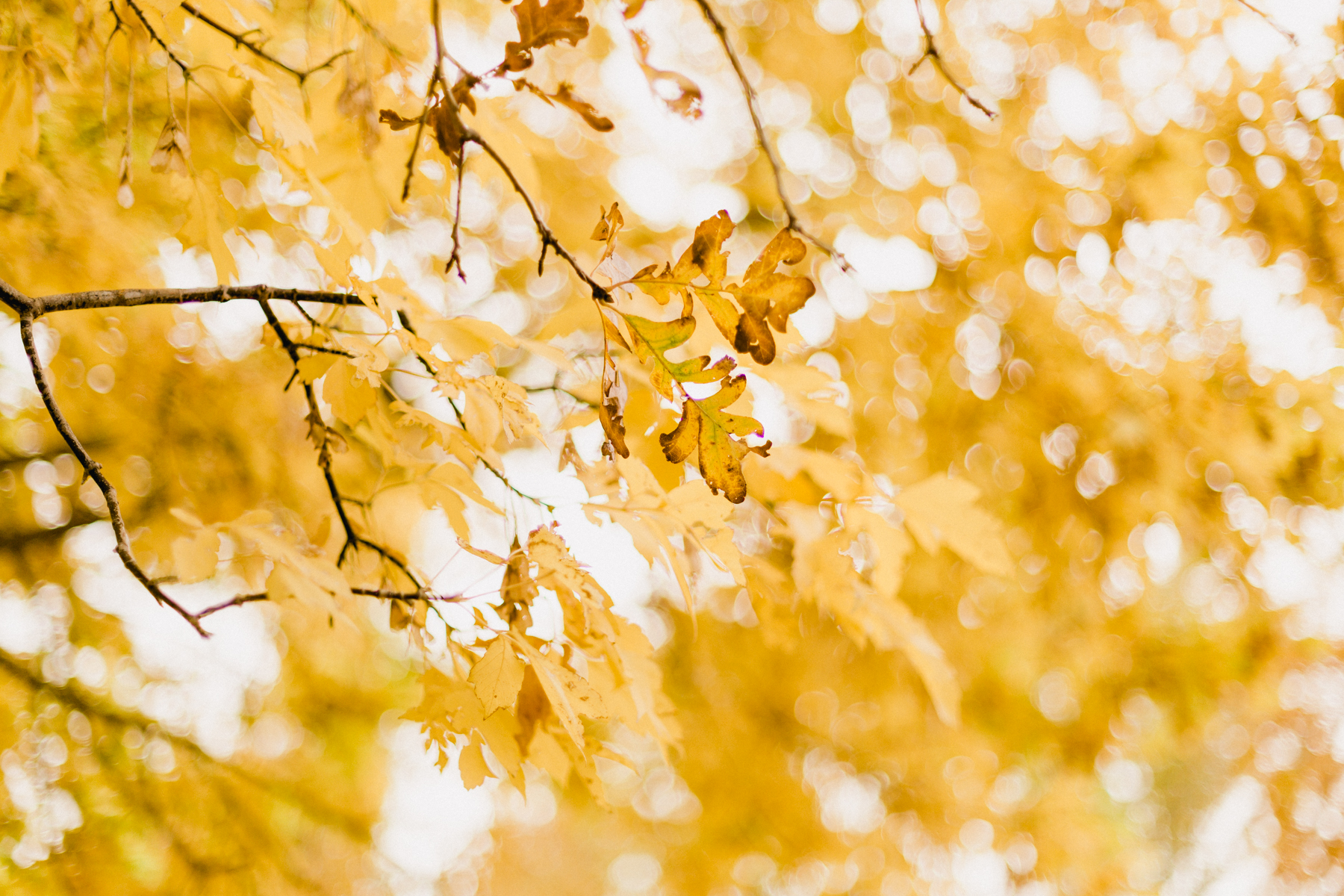 Yellow-Leaves-12.jpg