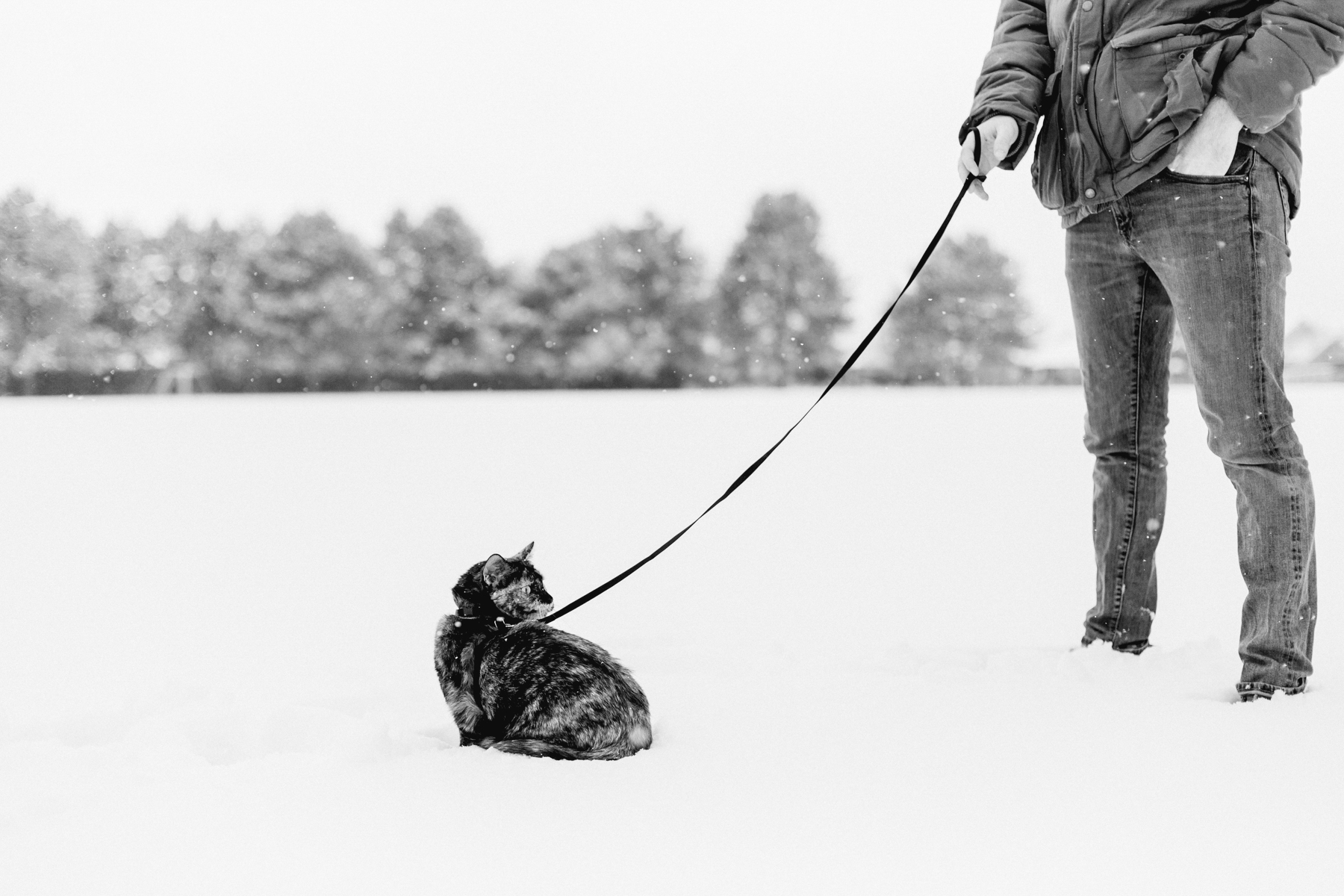 First-Snow-BW-6.jpg