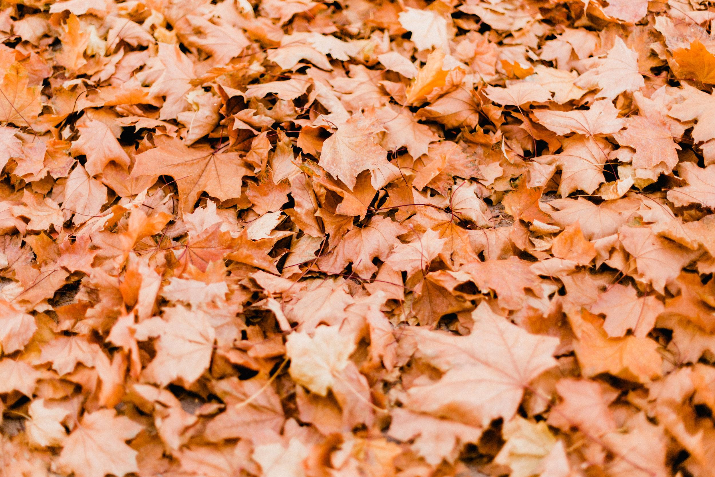 Leaves-4.jpg