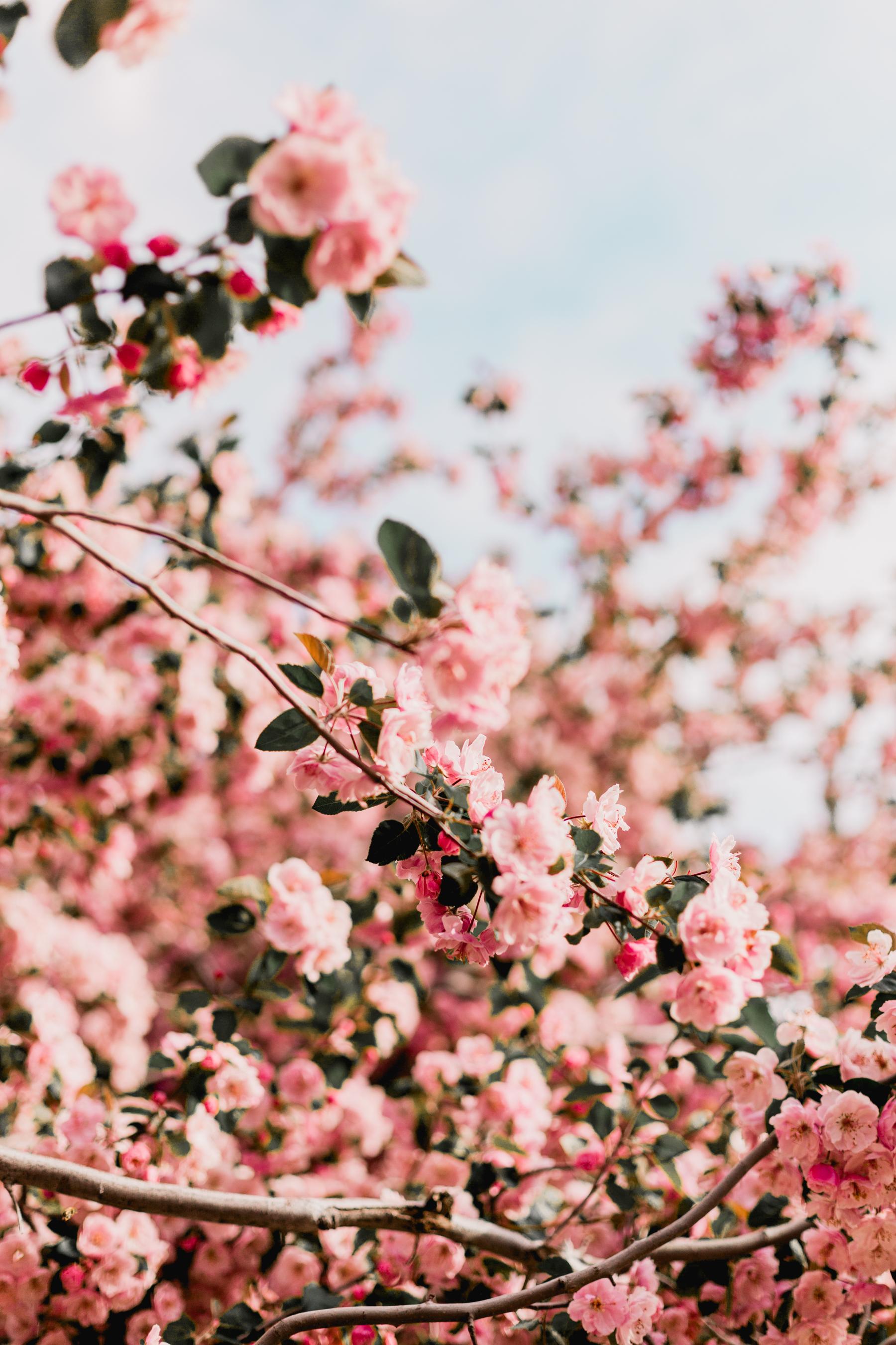 Blossoms-6.jpg