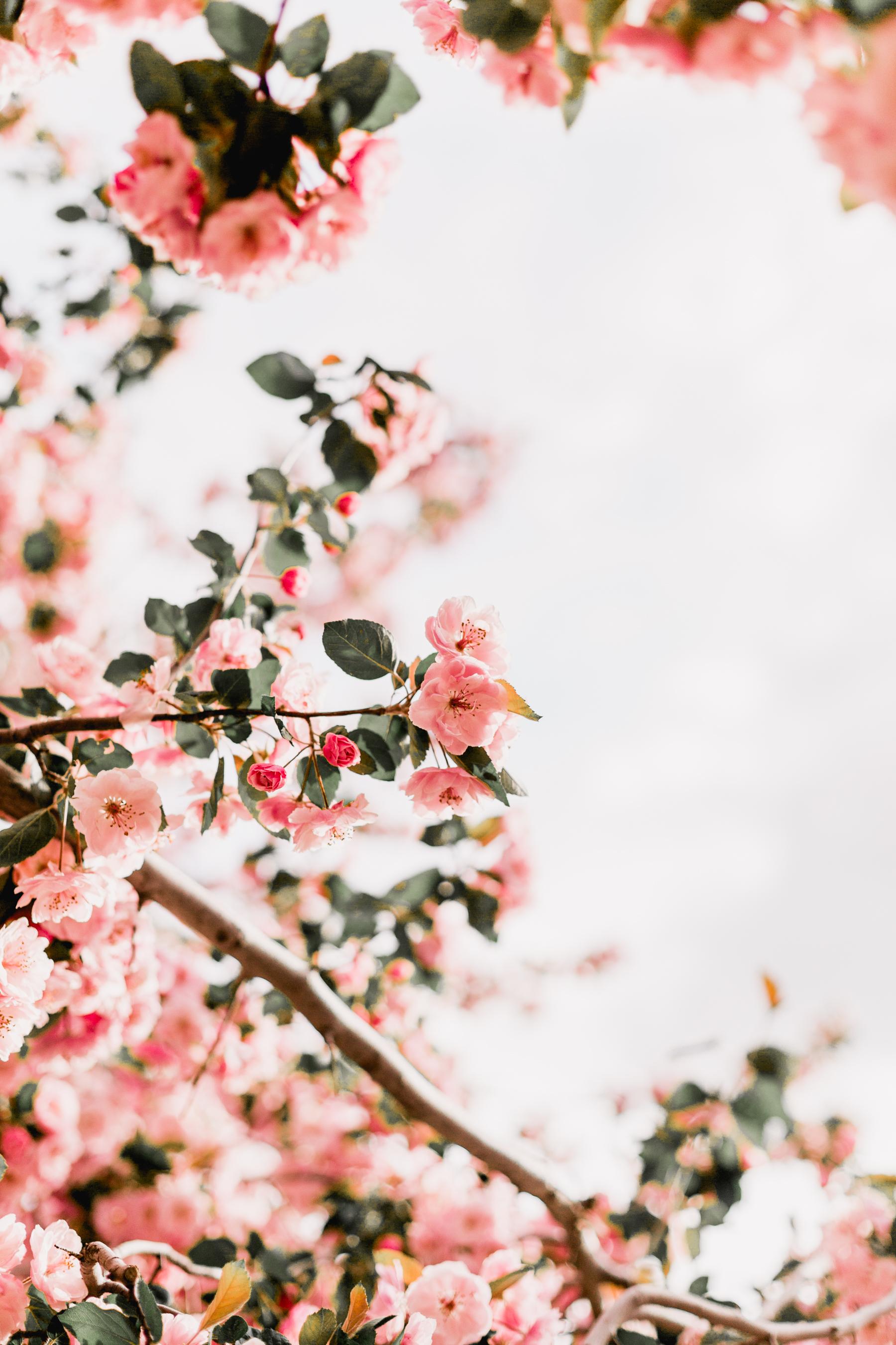 Blossoms-12.jpg