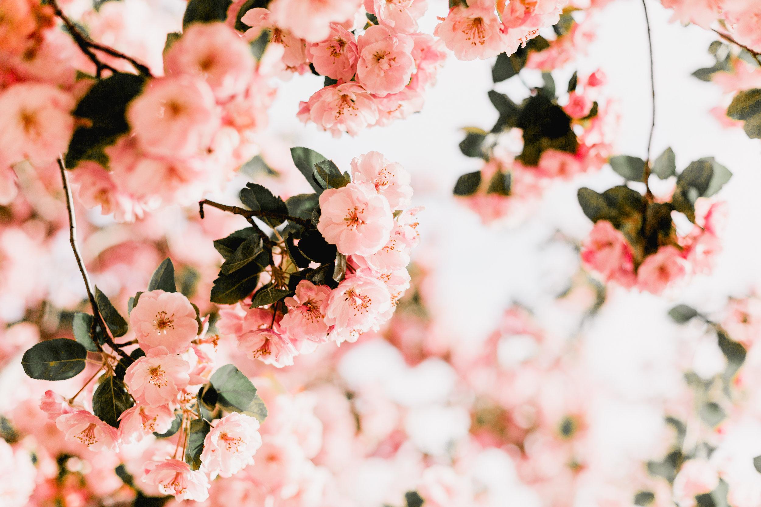 Blossoms-13.jpg