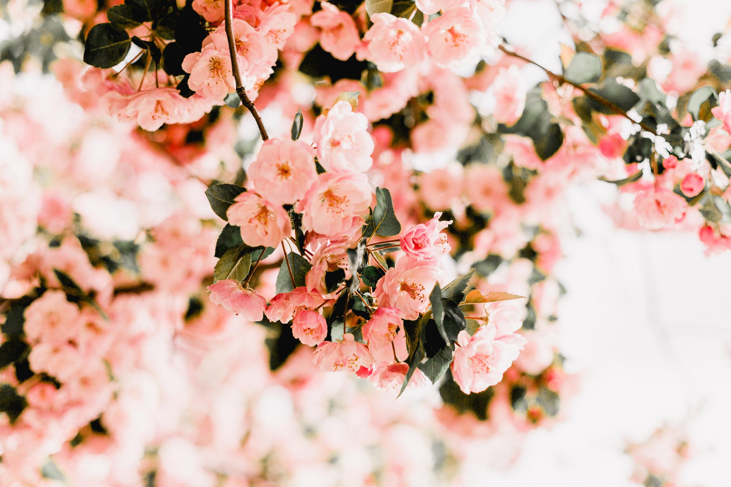 Blossoms-14.jpg