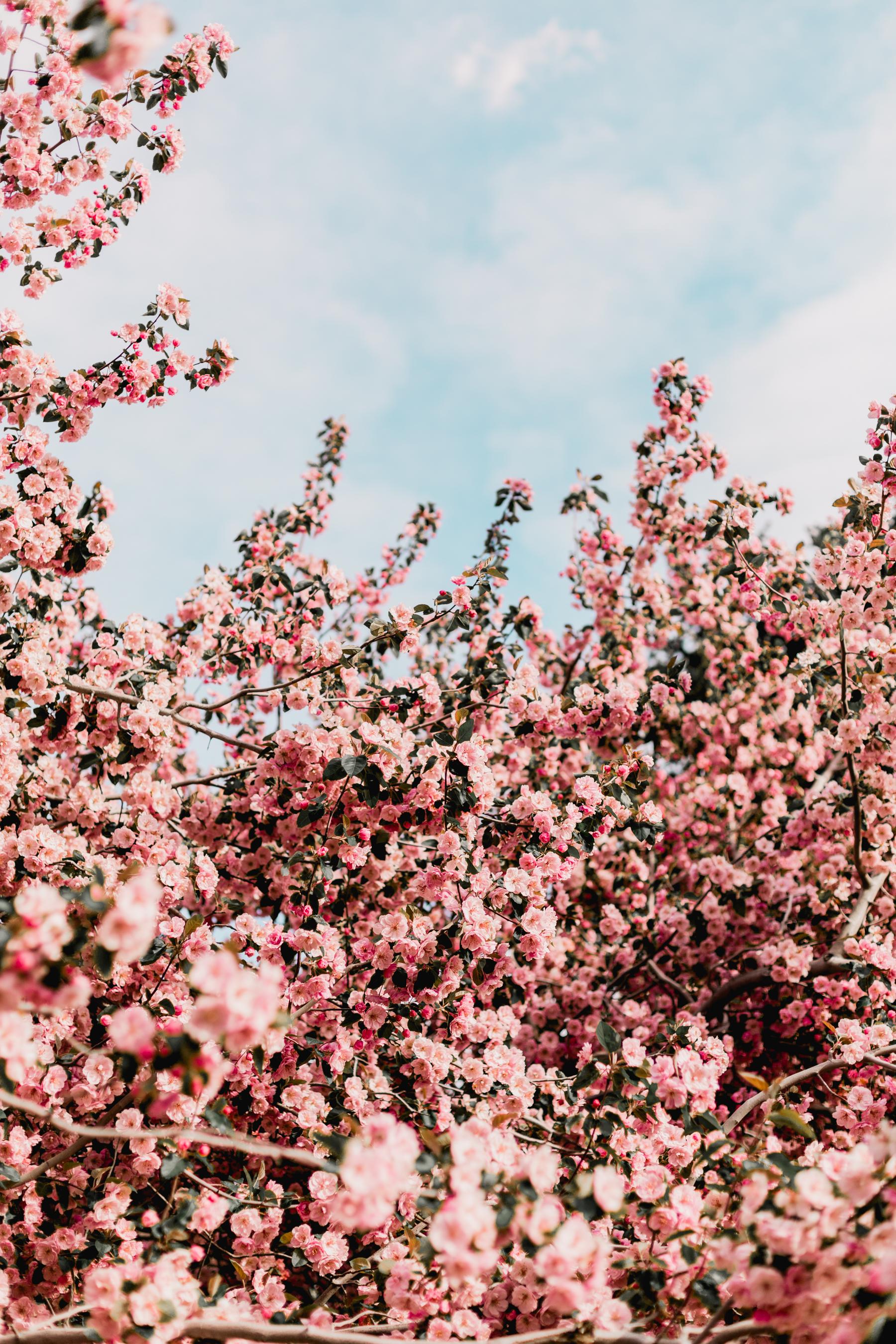Blossoms-19.jpg