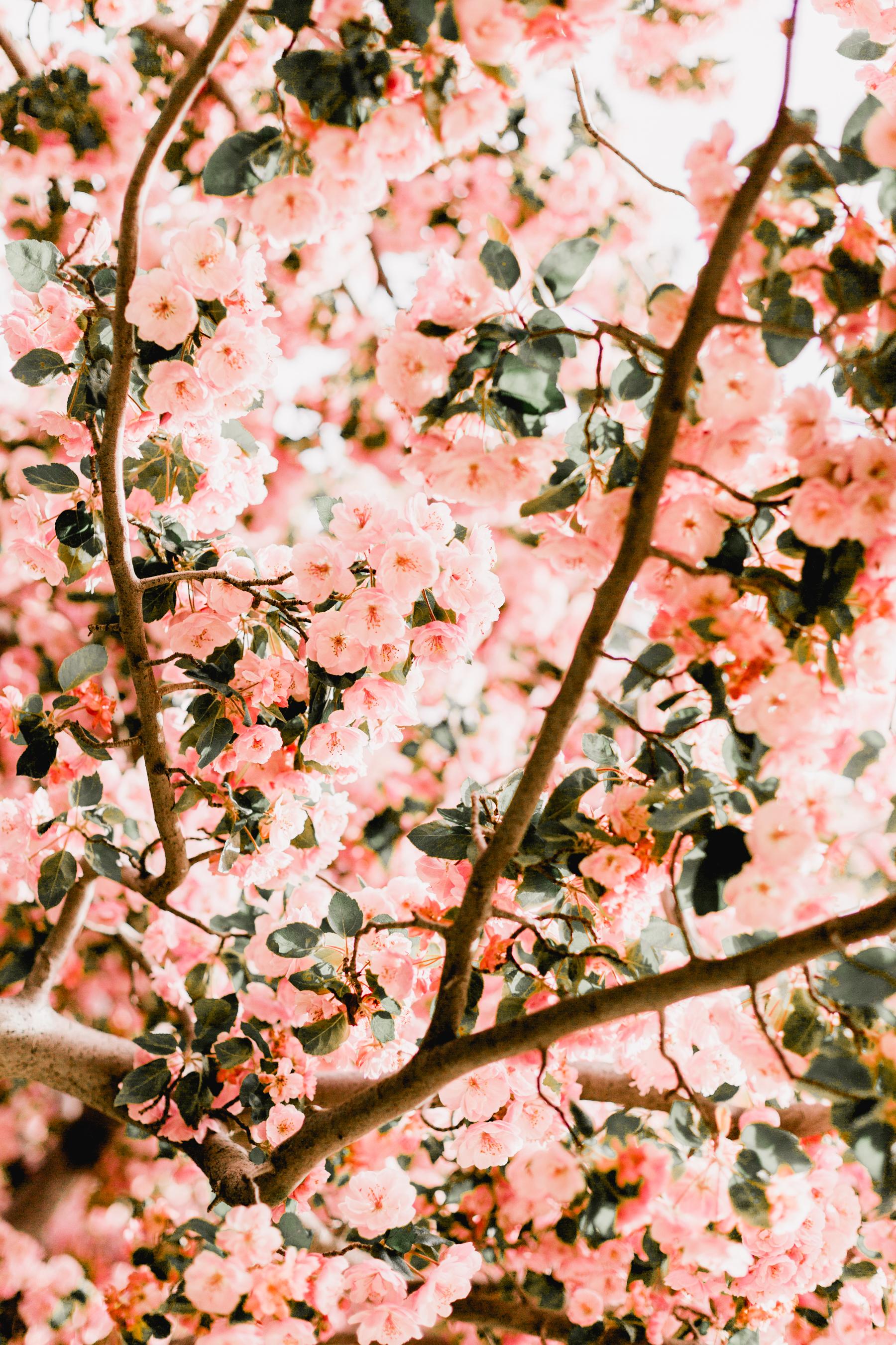 Blossoms-18.jpg