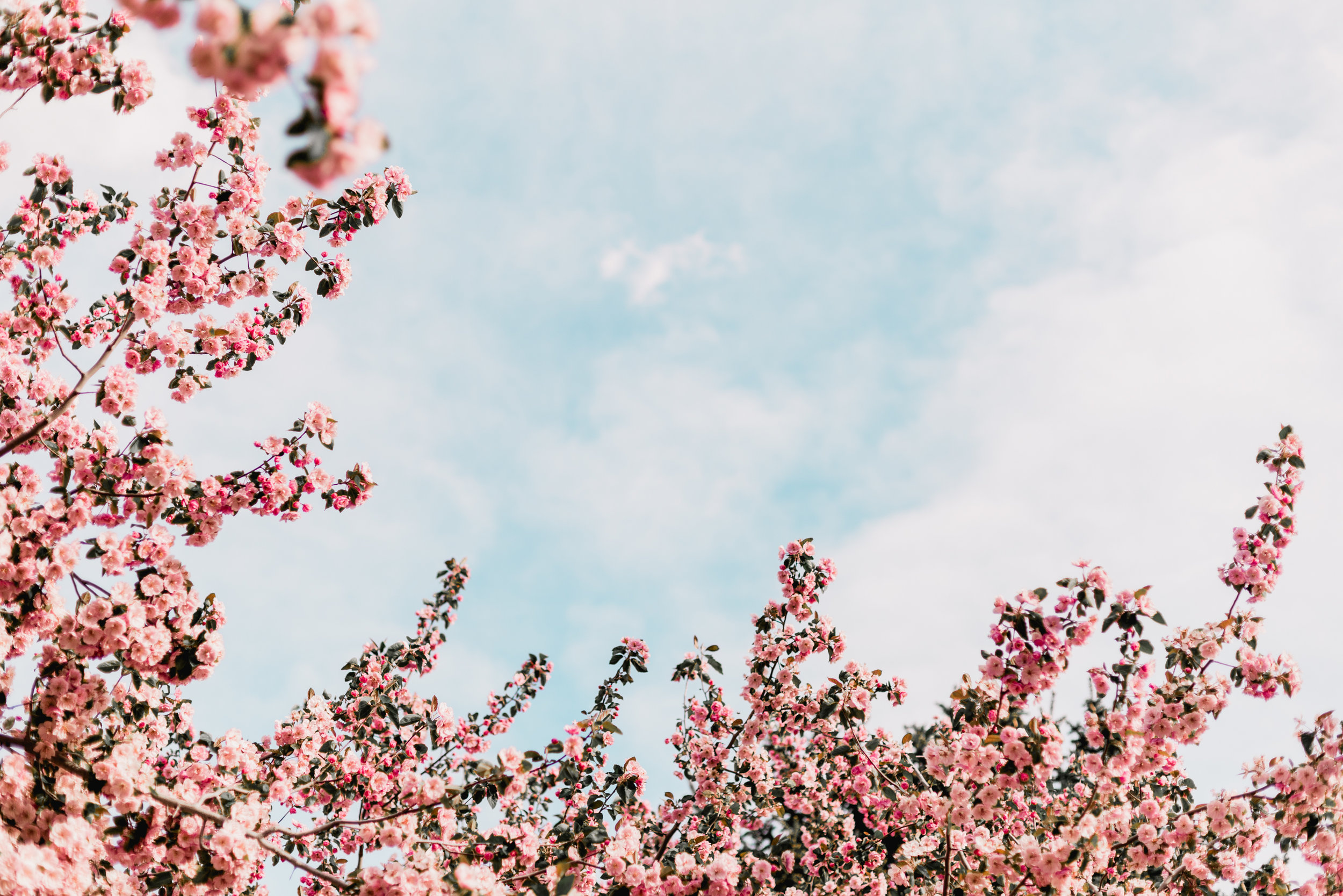 Blossoms-21.jpg