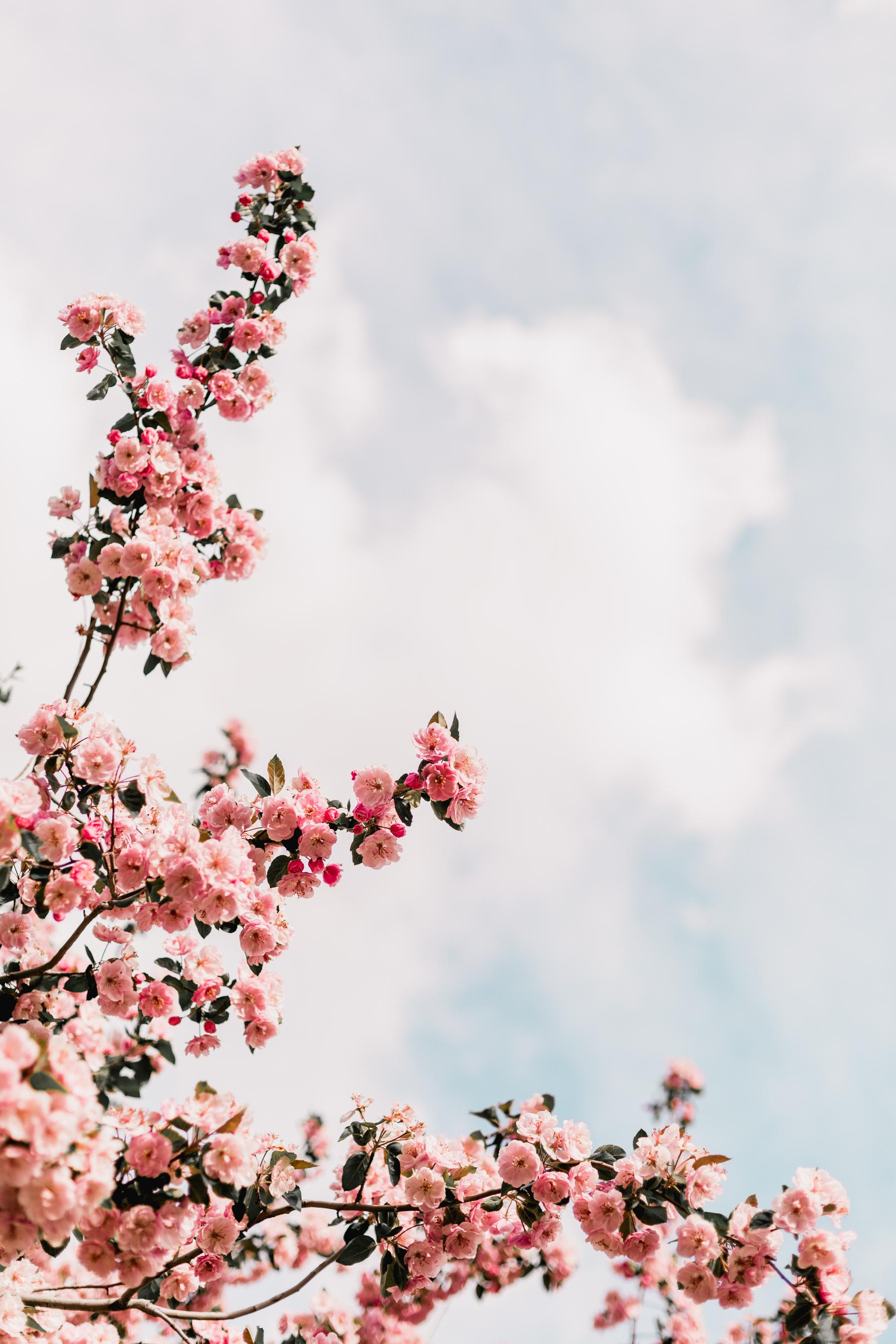 Blossoms-25.jpg