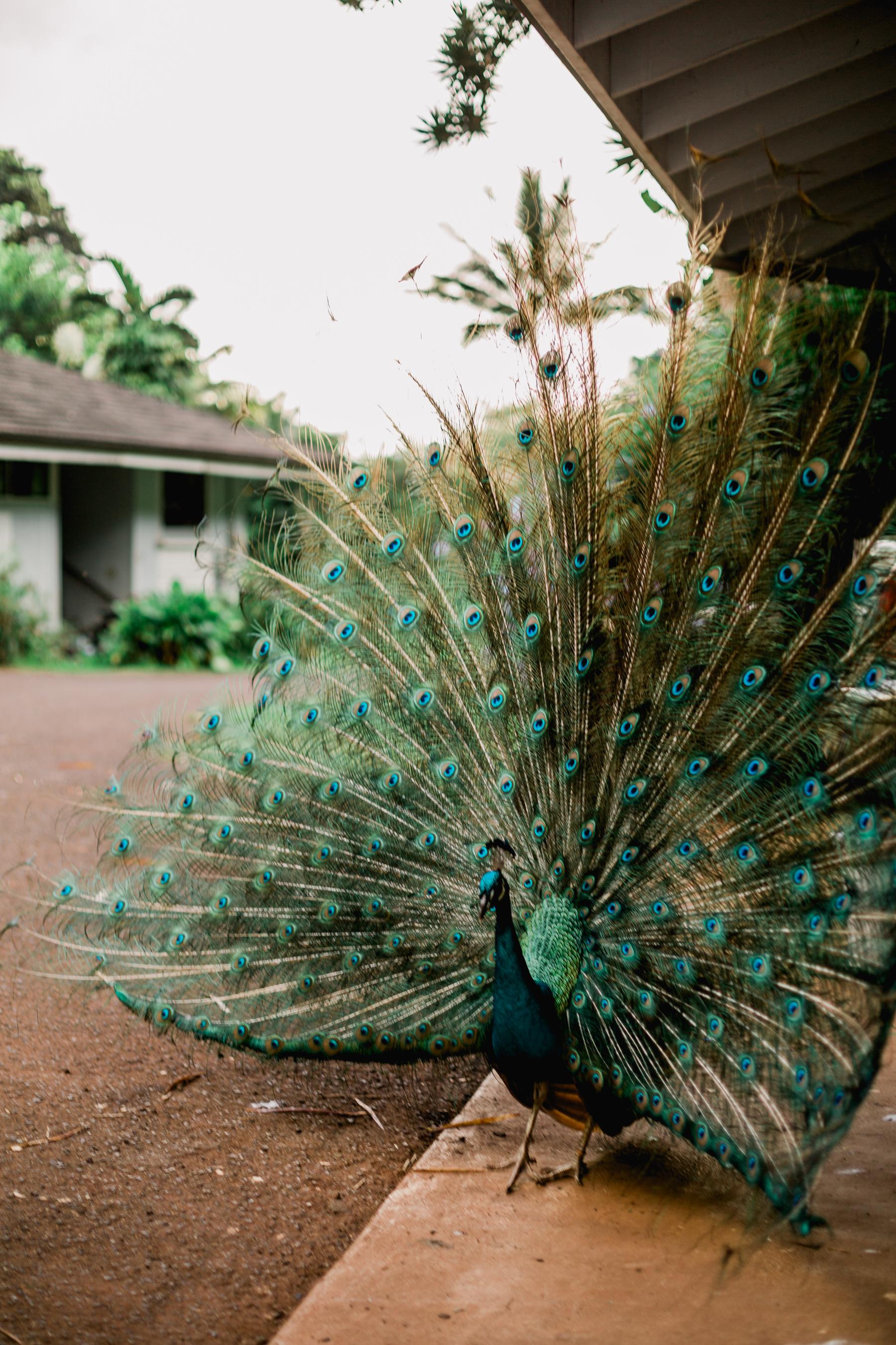 Hawaii-Day-Two-285.jpg