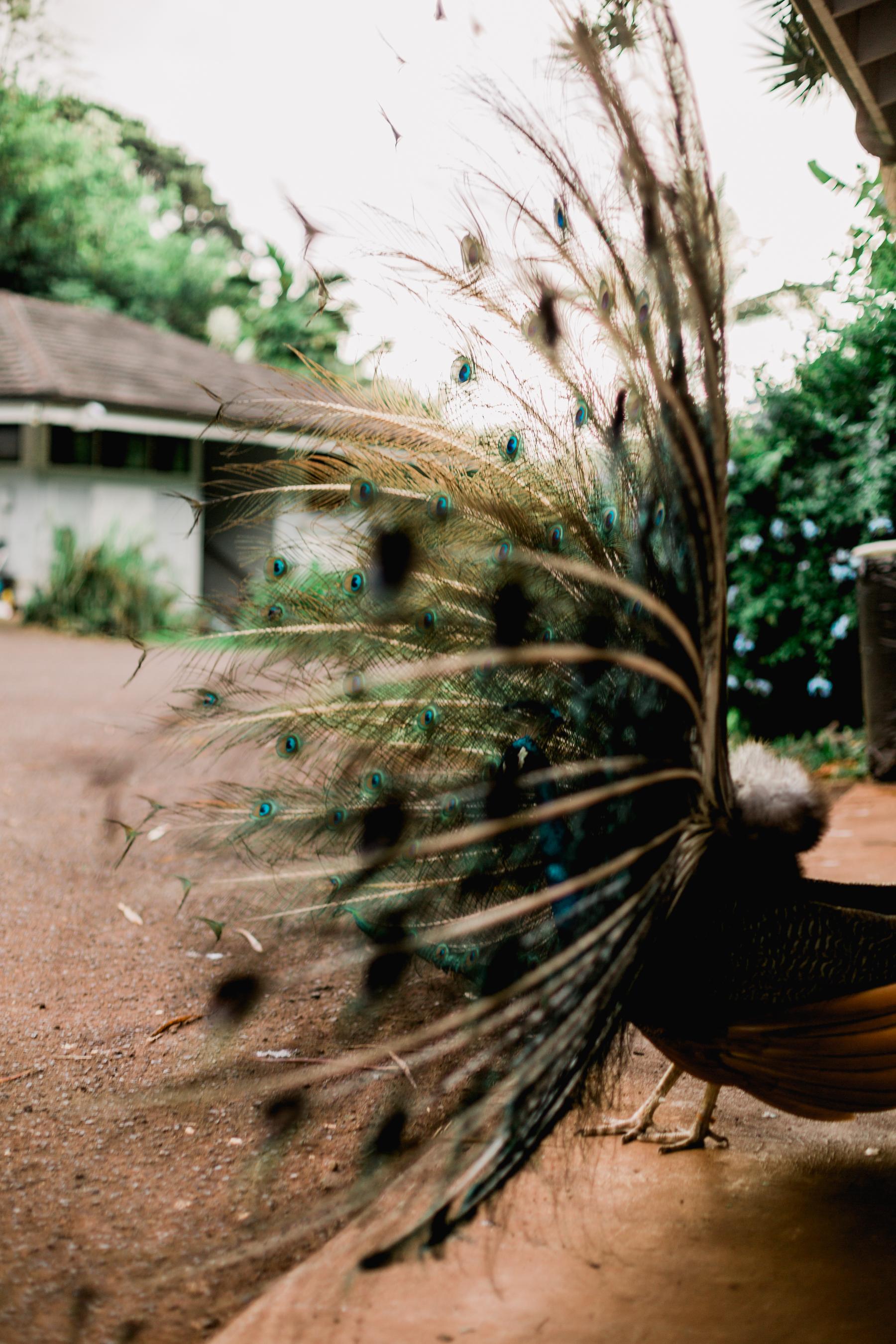 Hawaii-Day-Two-290.jpg