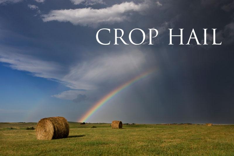 crop-hail.jpg