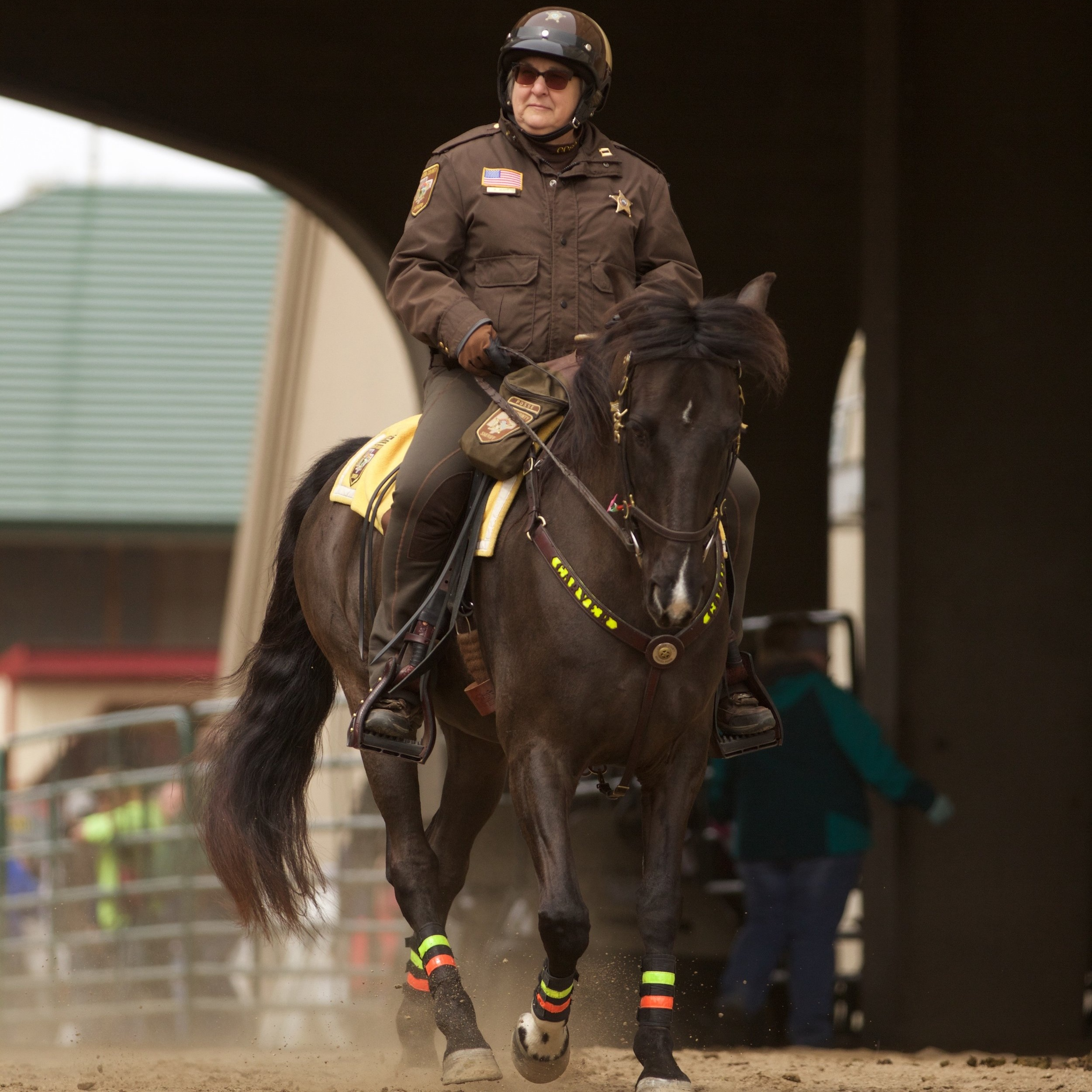 We are ambassadors - The Tennessee Walking Horse is worth getting excited about! We love sharing the amazing abilities and personalities of these horses with the world.
