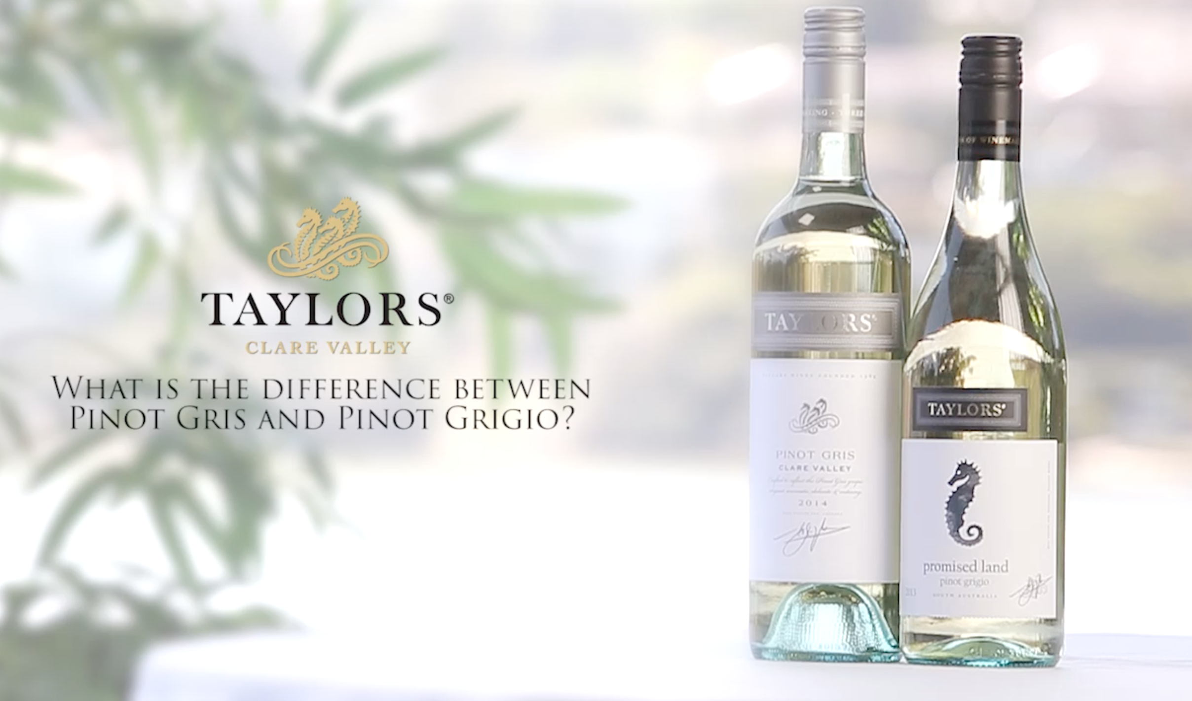 SPOT THE DIFFERENCE: Do you really know the difference? Taylor's master of wine is on hand to guide you through your wine choices.