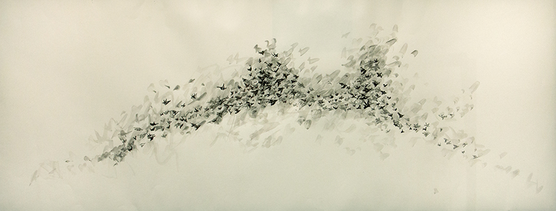 Starlings Study