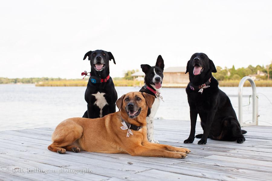 Website- Daniels Dogs-7414